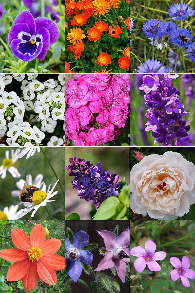 13 Edible Flowers to Grow in Your Garden